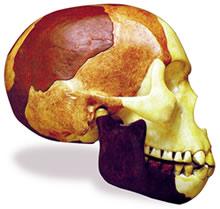crâne de piltdown