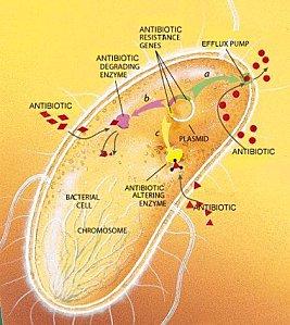 AntibioRes2