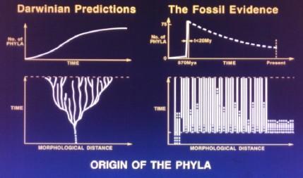 Prédictions darwiniens vs l'évidence des fossiles