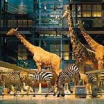 Muséum national d'histoire naturelle